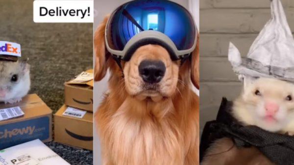 Best TikTok Animal Accounts 2021